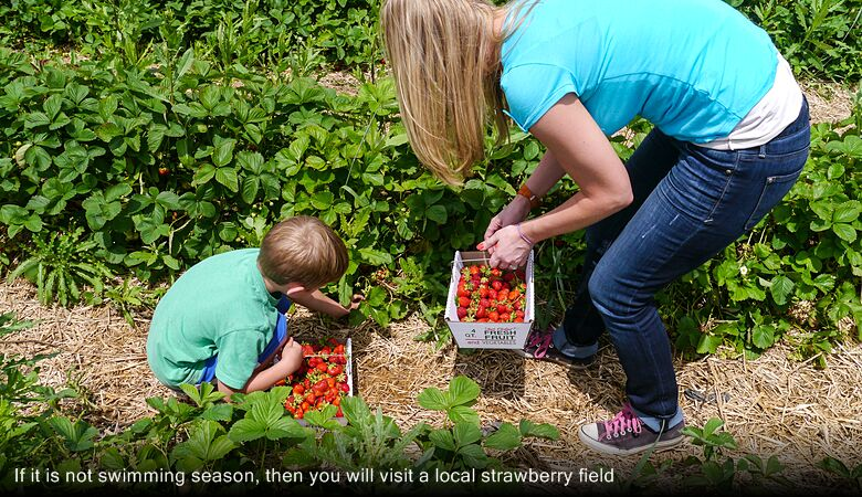 If it is not swimming season, then you will visit a local strawberry field