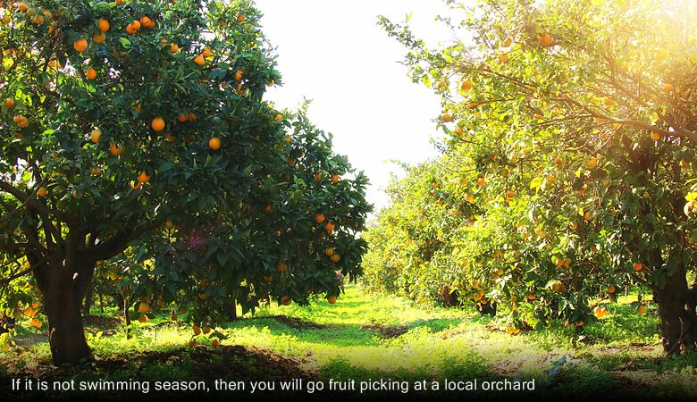 If it is not swimming season, then you will go fruit picking at a local orchard