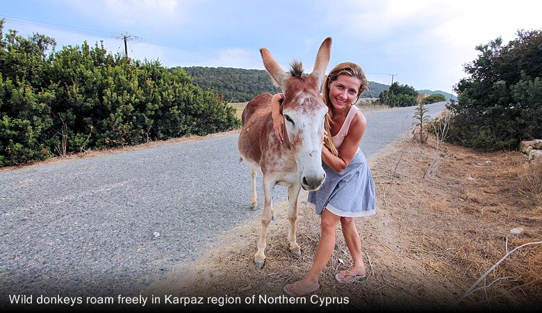 Wild donkeys roam freely in Karpaz region of Northern Cyprus